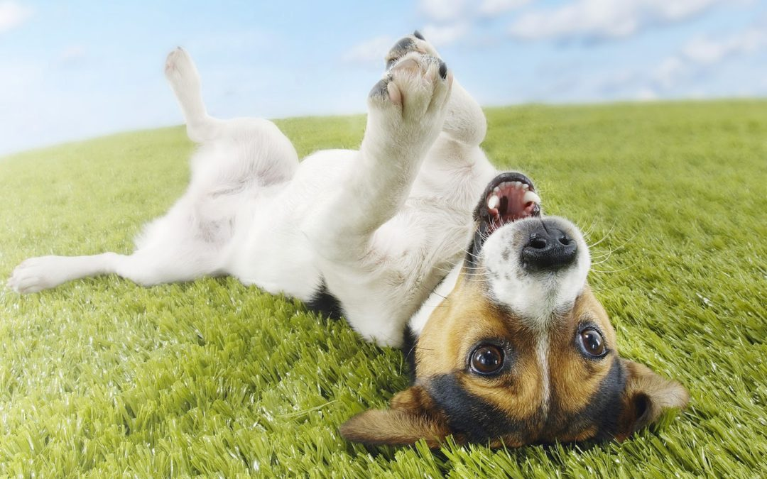 Cleaning Artificial Grass When You Have Dogs