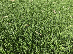 walnut creek california artificial grass